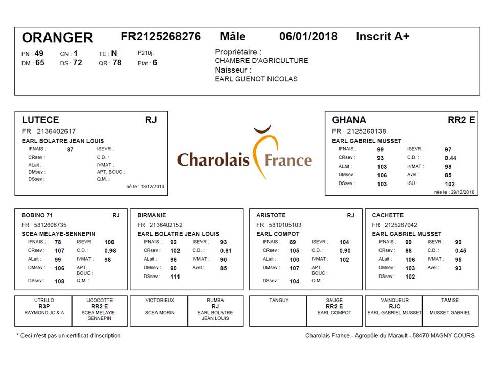 genealogie taureau charolais ORANGER