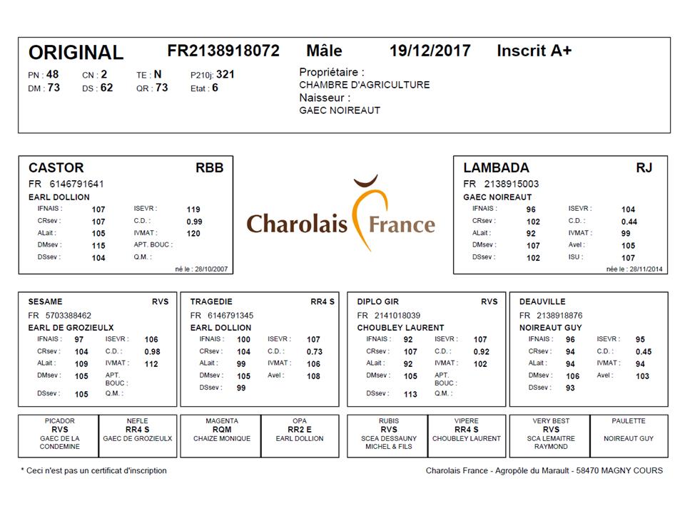genealogie taureau charolais ORIGINAL