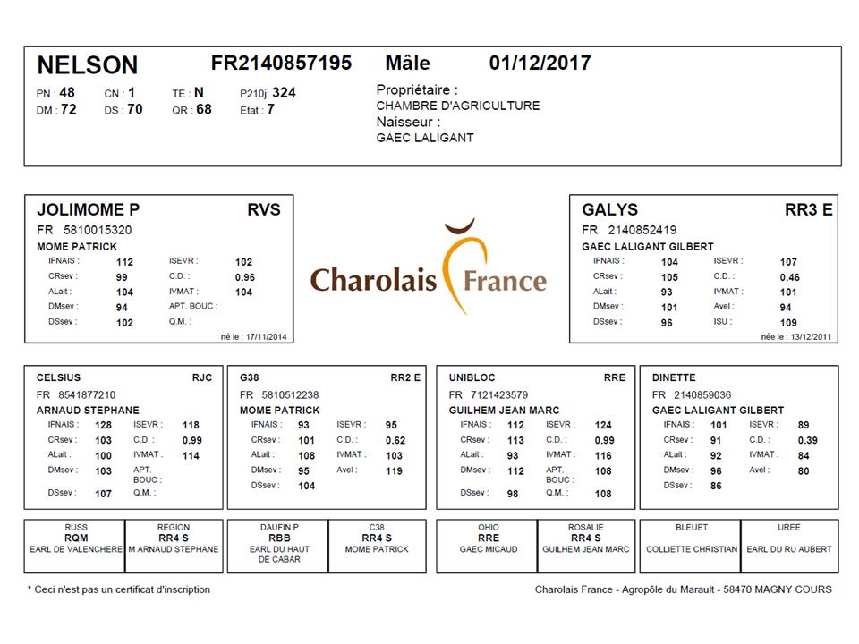 genealogie taureau charolais NELSON