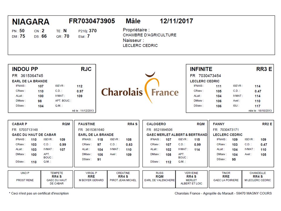genealogie taureau charolais NIAGARA