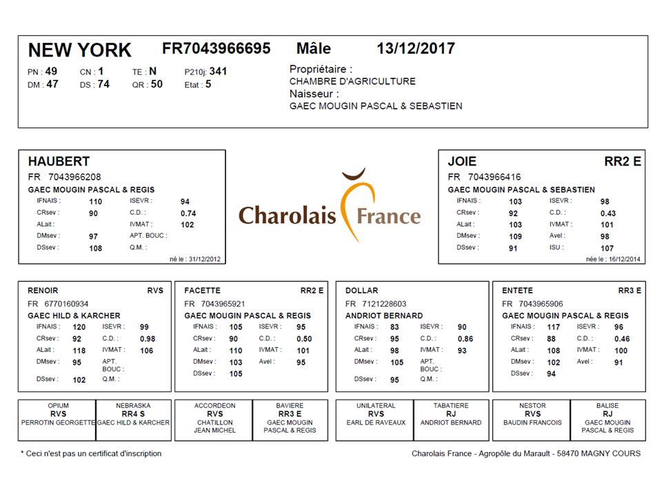 genealogie taureau charolais NEW YORK